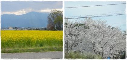 安曇野春の