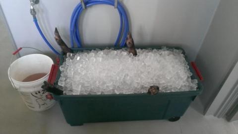 氷のお風呂