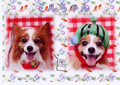 20140802_01.jpg