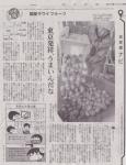 朝日新聞記事20140214_国産キウイフルーツ