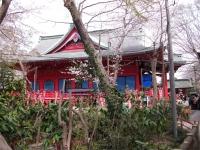 井之頭公園桜3