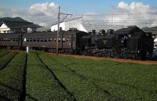 大井川鐵道SL急行列車「かわね路2号」(C12 190)(2011年9月13日・五和~神尾間)