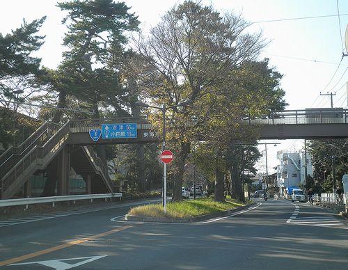 旧東海道・大磯・「統監道」の松並木(神奈川県中郡大磯町東小磯)(2011年12月29日)