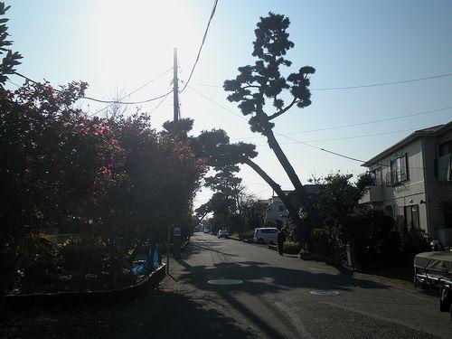 旧東海道・大磯(神奈川県中郡大磯町大磯)(2011年12月29日)
