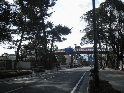 旧東海道(国道1号線)の松並木(神奈川県小田原市酒匂)(2011年12月31日)