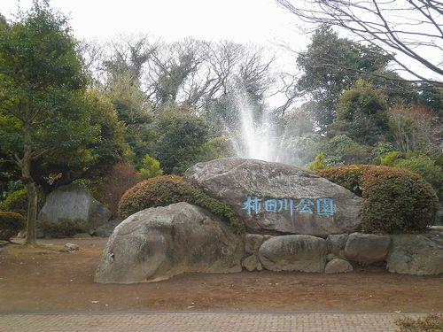 柿田川公園(静岡県駿東郡清水町柿田)(2012年1月29日)1