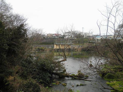 柿田川公園(静岡県駿東郡清水町柿田)(2012年1月29日)2
