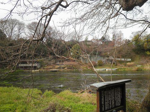 柿田川公園(静岡県駿東郡清水町柿田)(2012年1月29日)3
