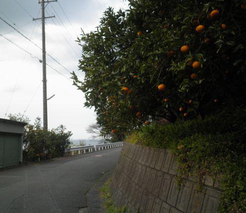 薩埵峠東口・寺尾(静岡市清水区由比寺尾)(2014年3月9日)4