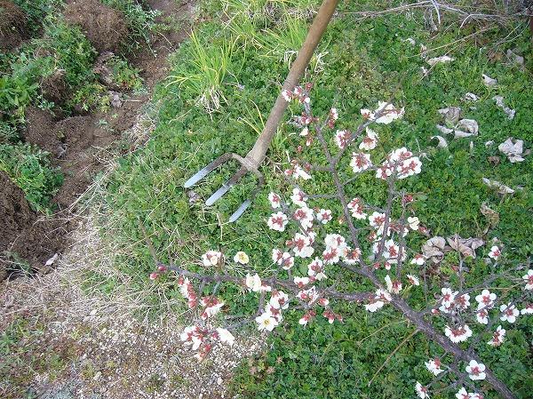 ミツゴで耕し26.2.22