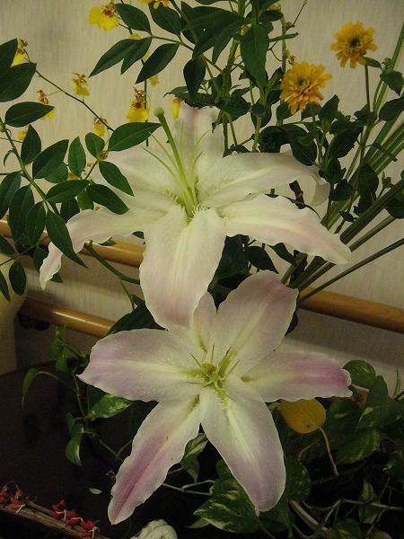 花がきれいになっていました 26.7.17