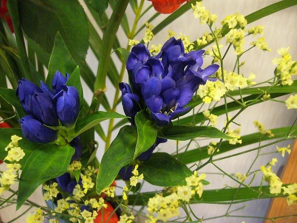 リンドウの花 26.7.28