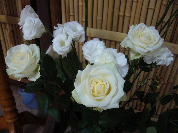 白い花 26.7.26