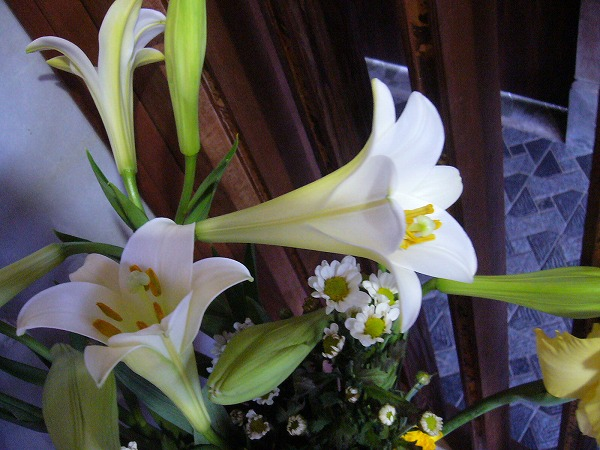 普通のユリの花 26.8.11