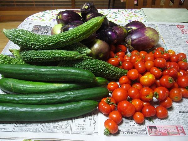 今日の野菜反対側から 26.8.13