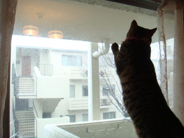 雪だ!ひゃっほー