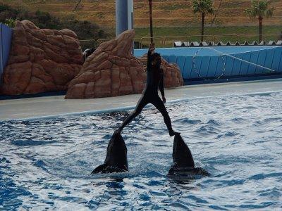 イルカのショー1