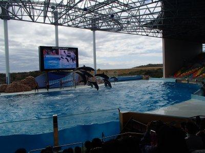 イルカのショー2