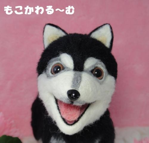 2代目黒柴ちゃん6