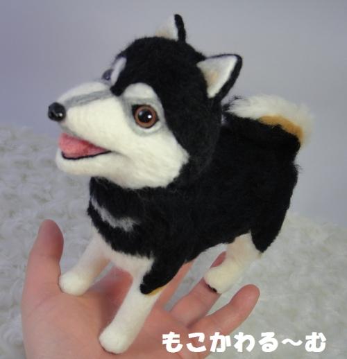 2代目黒柴ちゃん8