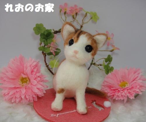 茶白子猫1