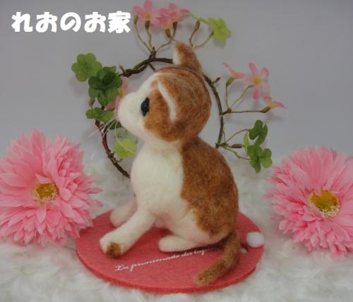 茶白子猫2