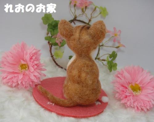 茶白子猫3