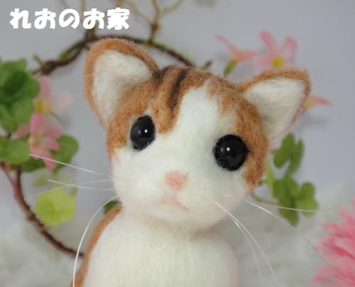 茶白子猫4