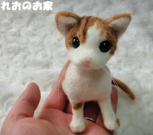 茶白子猫5