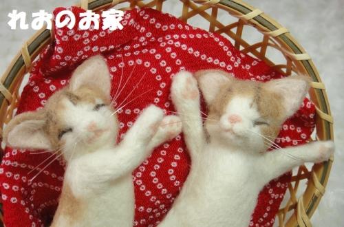 ねんね子猫4
