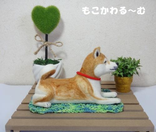茶柴ふせポーズ5