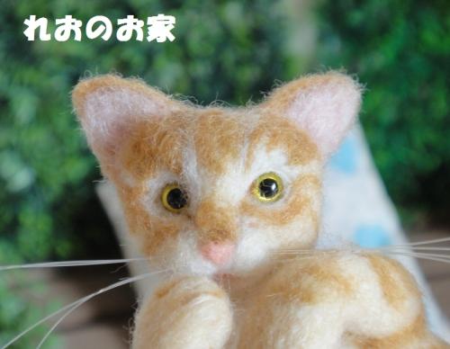 茶トラ子猫4