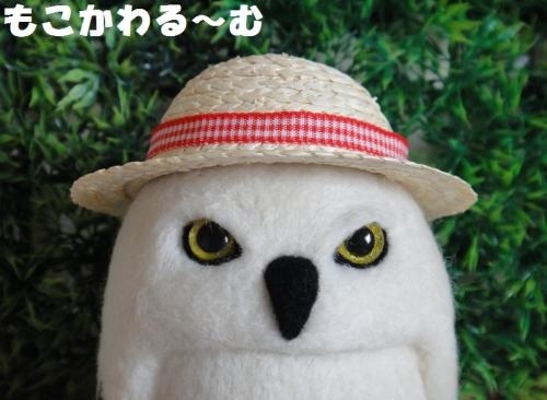 麦わらシロフクロウ4