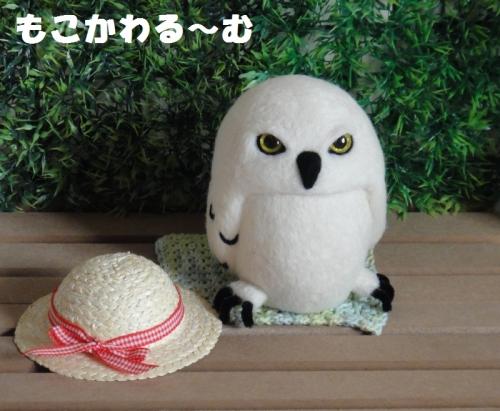 麦わらシロフクロウ6