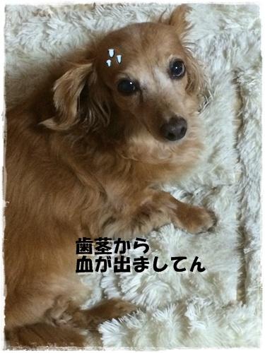IMG_3655.jpg