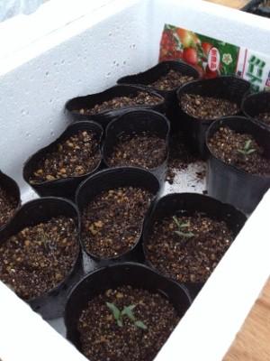 2014.3.27家庭菜園4