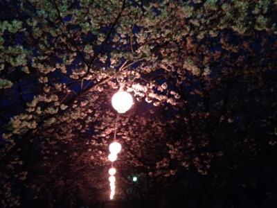 2014.3.27桜