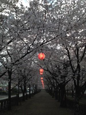2014.3.27桜2