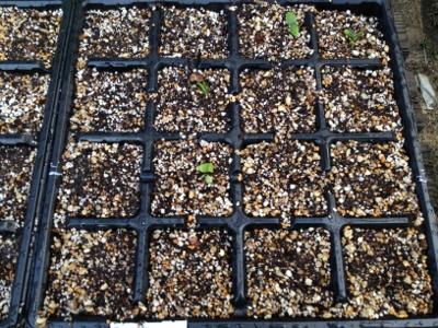 2014.4.3家庭菜園