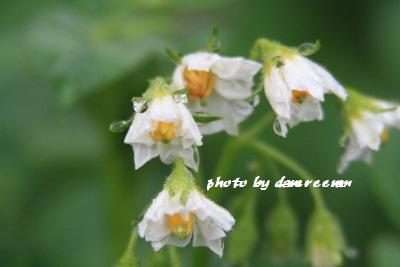 2014.5.13家庭菜園4