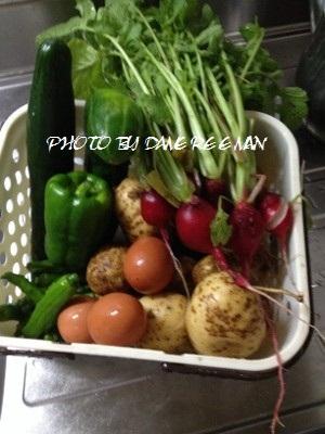 2014.6.10家庭菜園
