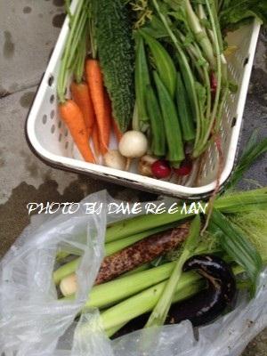 2014.6.24家庭菜園