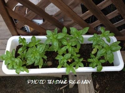 2014.6.24家庭菜園2