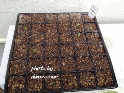 2014.9.5家庭菜園