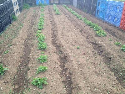2014.4.12家庭菜園3