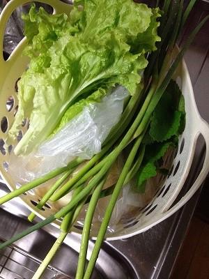2014.4.20家庭菜園2