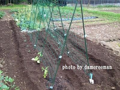 2014.5.3家庭菜園