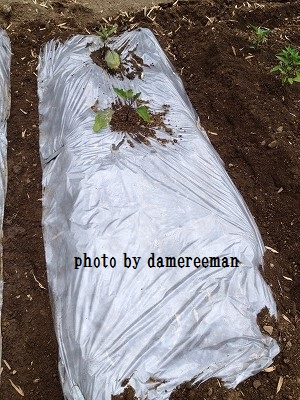2014.5.3家庭菜園4