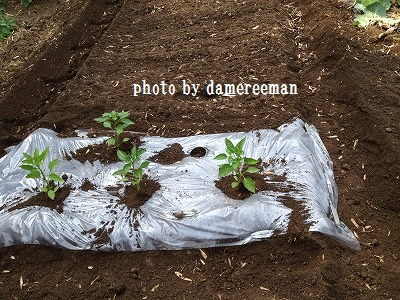 2014.5.3家庭菜園6