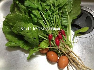 2014.5.29家庭菜園8